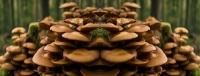 Új Biogomba termékcsalád bevezetése
